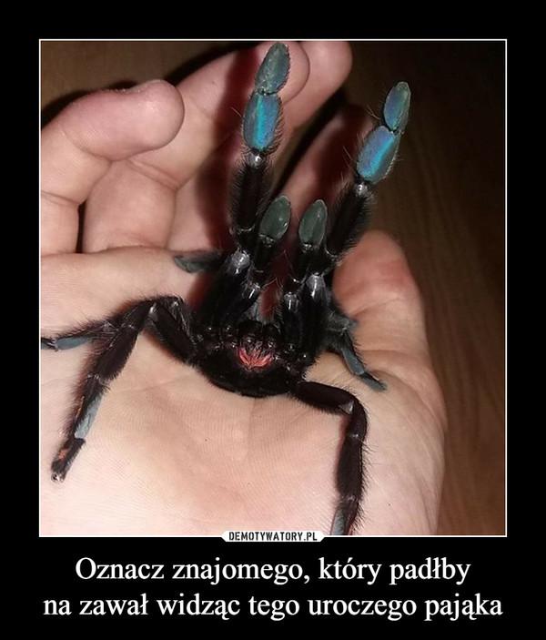 Oznacz znajomego, który padłbyna zawał widząc tego uroczego pająka –