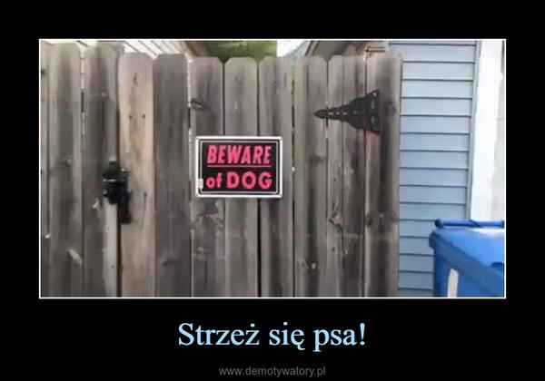 Strzeż się psa! –