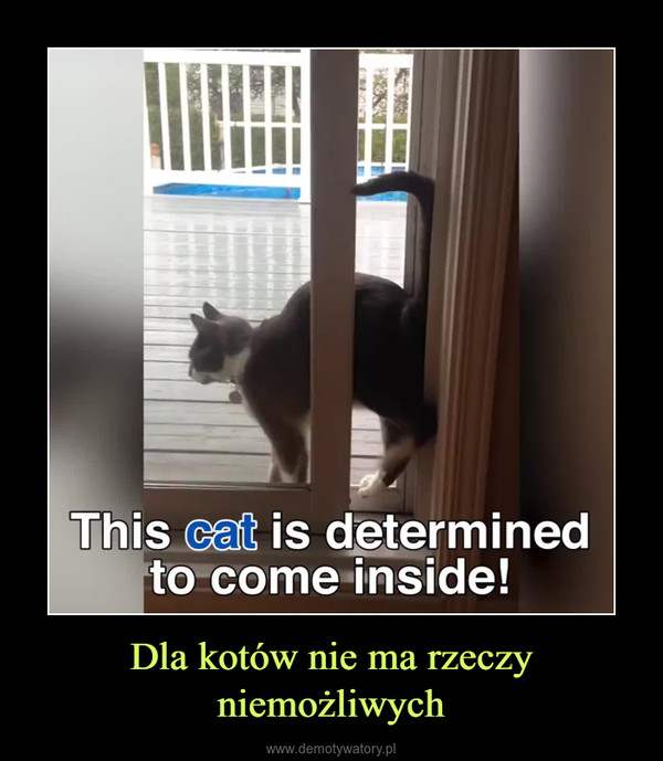 Dla kotów nie ma rzeczy niemożliwych –