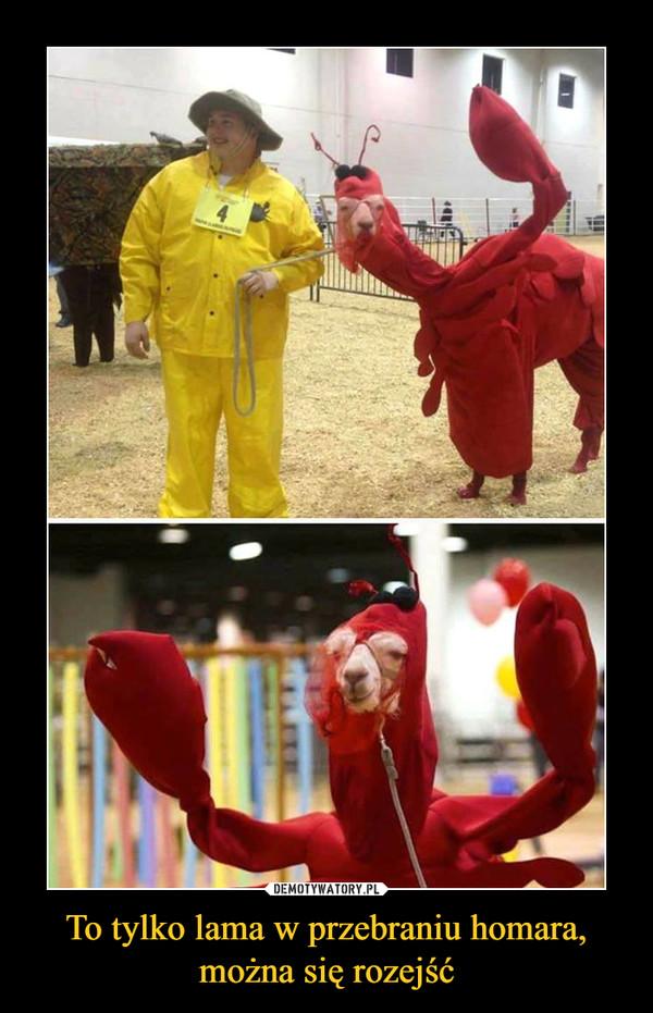To tylko lama w przebraniu homara, można się rozejść –