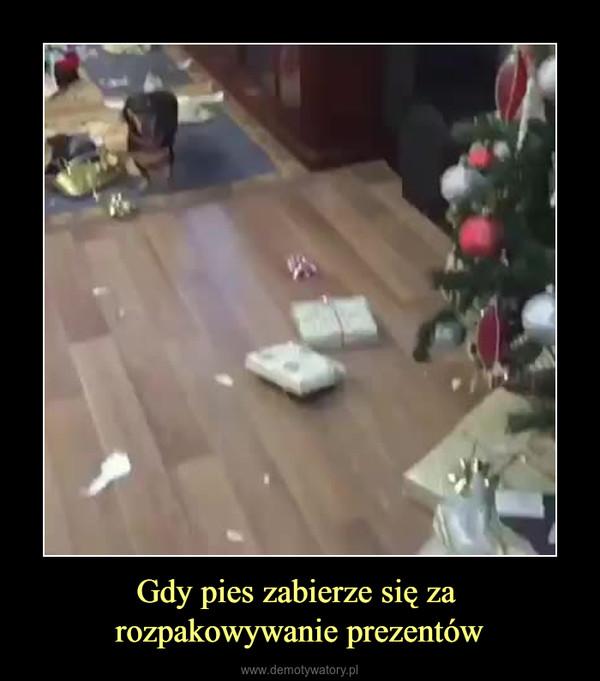 Gdy pies zabierze się za rozpakowywanie prezentów –