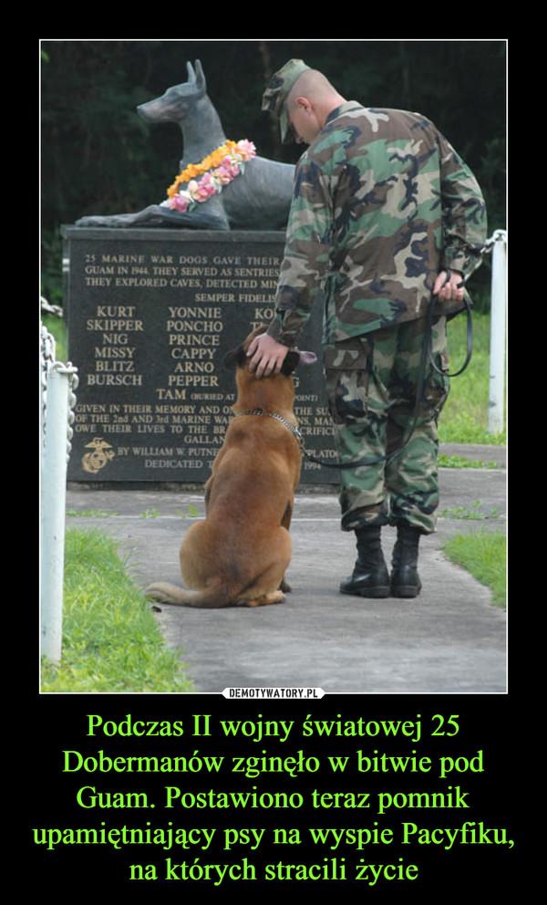 Podczas II wojny światowej 25 Dobermanów zginęło w bitwie pod Guam. Postawiono teraz pomnik upamiętniający psy na wyspie Pacyfiku, na których stracili życie –
