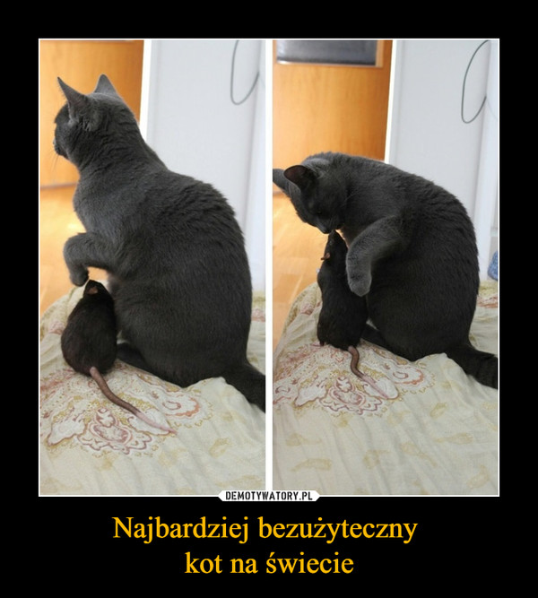 Najbardziej bezużyteczny kot na świecie –
