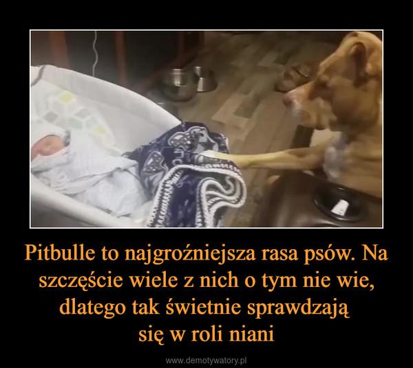 Pitbulle to najgroźniejsza rasa psów. Na szczęście wiele z nich o tym nie wie, dlatego tak świetnie sprawdzają się w roli niani –