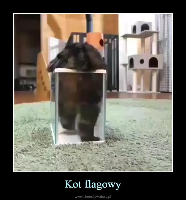 Kot flagowy –