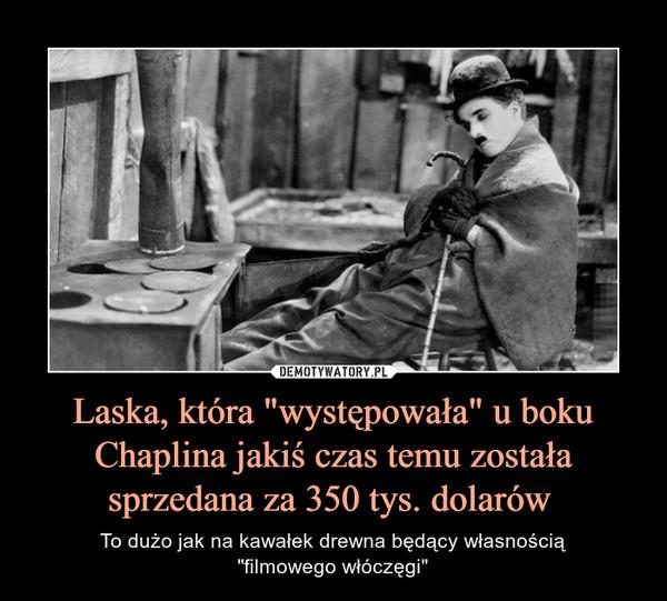 """Laska, która """"występowała"""" u boku Chaplina jakiś czas temu została sprzedana za 350 tys. dolarów  – To dużo jak na kawałek drewna będący własnością""""filmowego włóczęgi"""""""