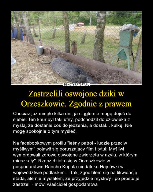 Zastrzelili oswojone dziki w Orzeszkowie. Zgodnie z prawem