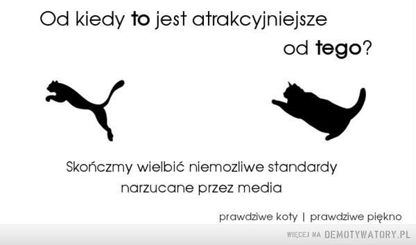 Atrakcyjność –  Od kiedy to jest atrakcyjniejszeod tego?Skończmy wielbić niemozliwe standardynarzucane przez mediaprawdziwe koty I prawdziwe piękno