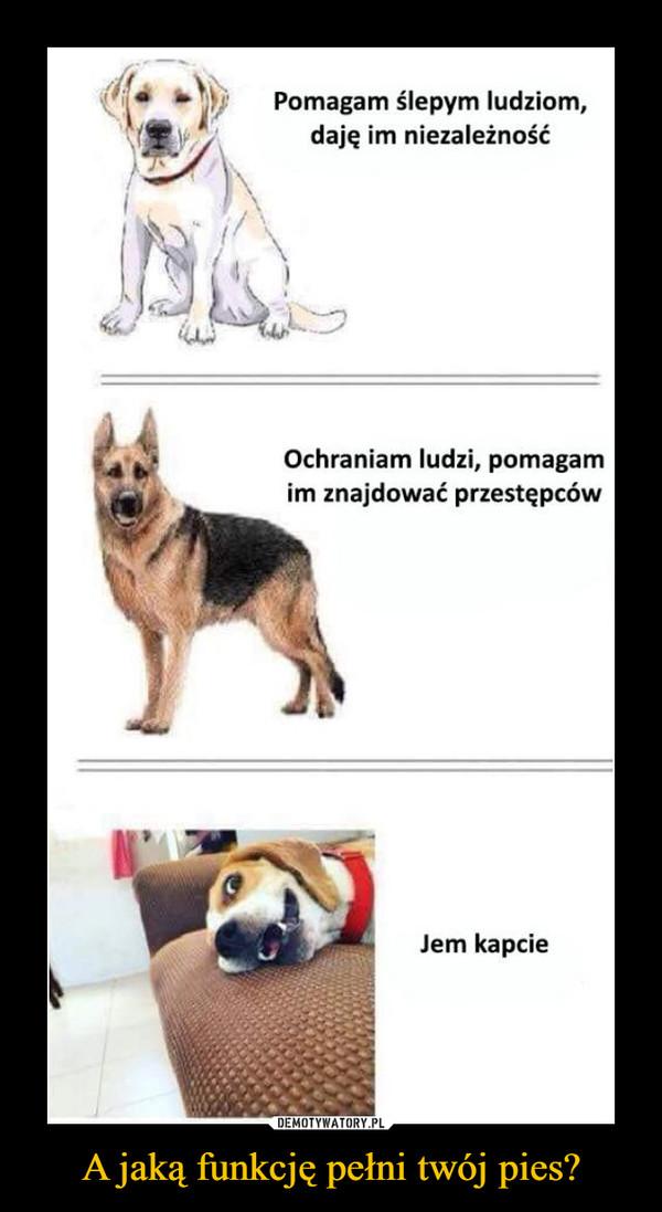 A jaką funkcję pełni twój pies? –  Pomagam ślepym ludziom, daję im niezależność Ochraniam ludzi, pomagam im znajdować przestępców Jem kapcie