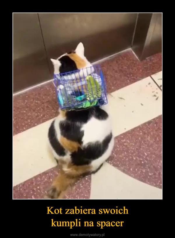 Kot zabiera swoichkumpli na spacer –