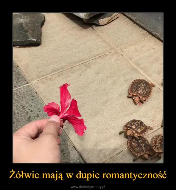 Żółwie mają w dupie romantyczność –