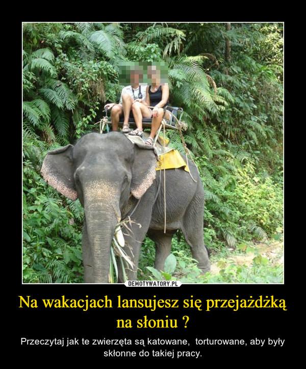 Na wakacjach lansujesz się przejażdżką na słoniu ? – Przeczytaj jak te zwierzęta są katowane,  torturowane, aby były skłonne do takiej pracy.