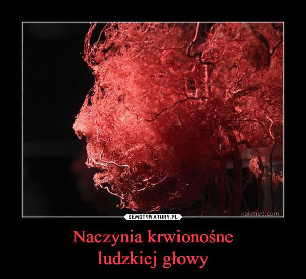 Naczynia krwionośneludzkiej głowy –