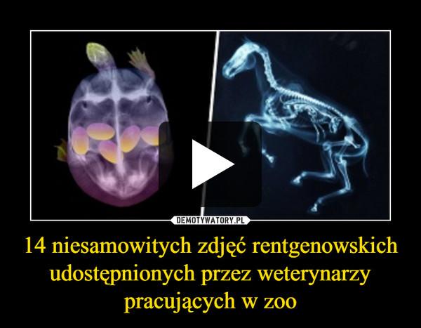 14 niesamowitych zdjęć rentgenowskich udostępnionych przez weterynarzy pracujących w zoo –