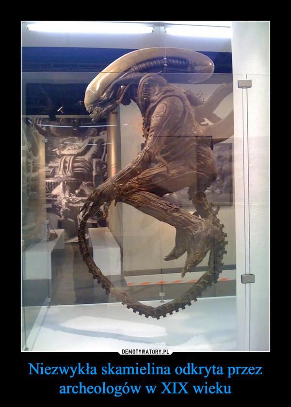 Niezwykła skamielina odkryta przez archeologów w XIX wieku –