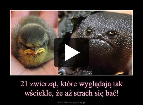 21 zwierząt, które wyglądają tak wściekle, że aż strach się bać! –