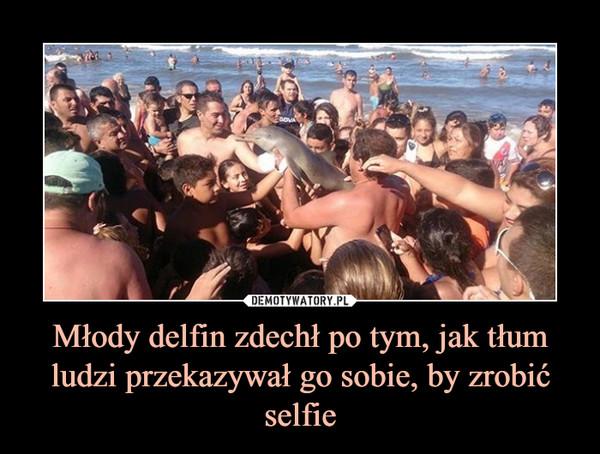 Młody delfin zdechł po tym, jak tłum ludzi przekazywał go sobie, by zrobić selfie –