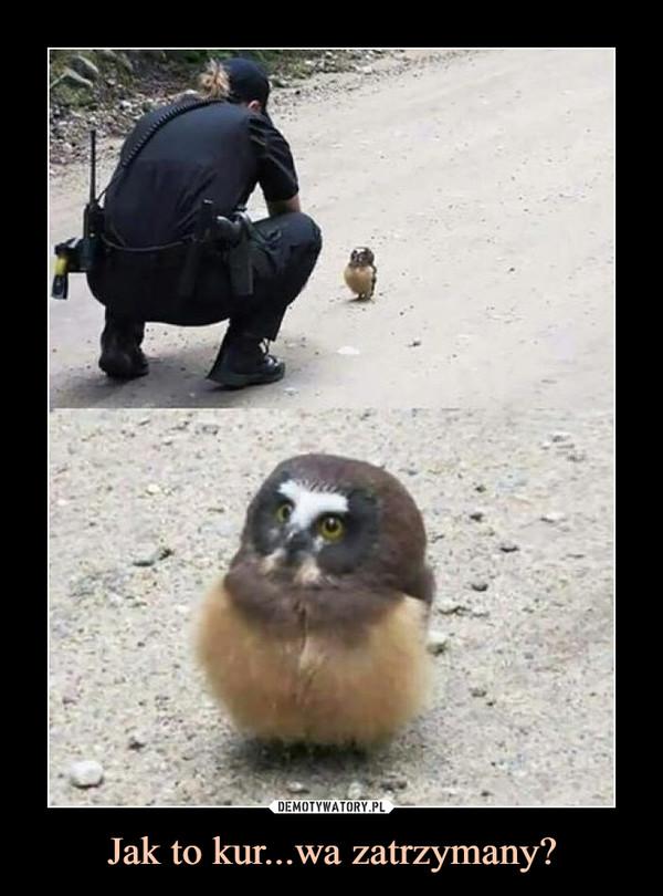 Jak to kur...wa zatrzymany? –