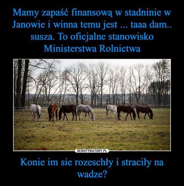 Konie im sie rozeschły i straciły na wadze? –