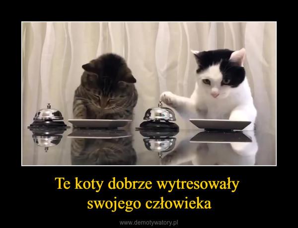 Te koty dobrze wytresowały swojego człowieka –