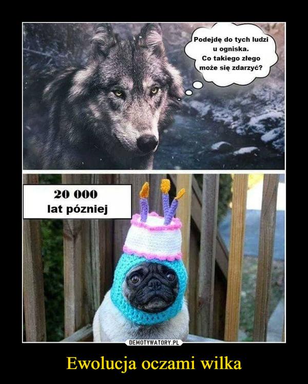 Ewolucja oczami wilka –  Podejdę do tych ludziu ogniskaCo takiego złegomoże się zdarzyć?20 000lat pózniej