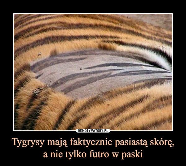 Tygrysy mają faktycznie pasiastą skórę, a nie tylko futro w paski –