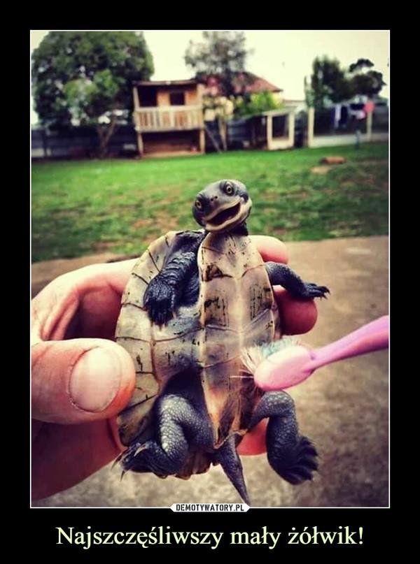 Najszczęśliwszy mały żółwik! –