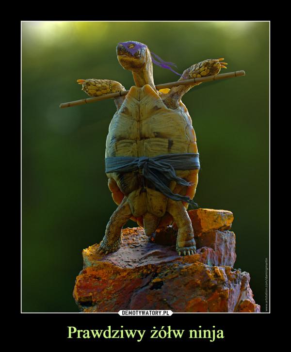 Prawdziwy żółw ninja –