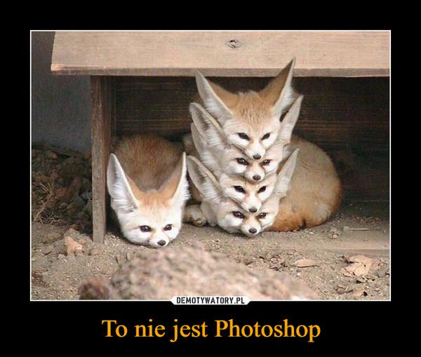 To nie jest Photoshop –