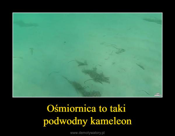 Ośmiornica to taki podwodny kameleon –