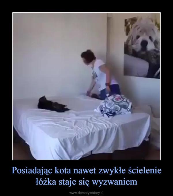 Posiadając kota nawet zwykłe ścielenie łóżka staje się wyzwaniem –