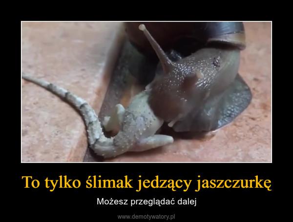 To tylko ślimak jedzący jaszczurkę – Możesz przeglądać dalej