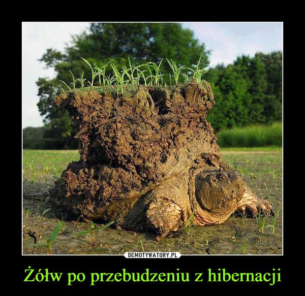Żółw po przebudzeniu z hibernacji –