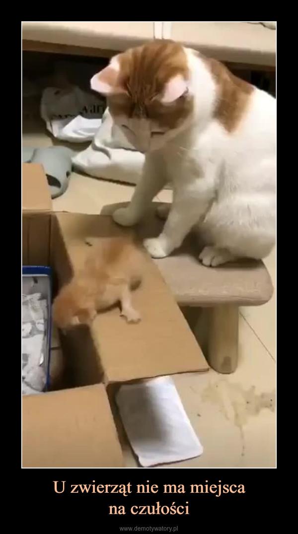 U zwierząt nie ma miejscana czułości –