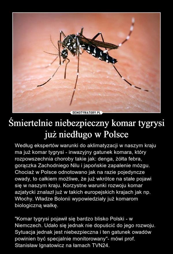 """Śmiertelnie niebezpieczny komar tygrysi już niedługo w Polsce – Według ekspertów warunki do aklimatyzacji w naszym kraju ma już komar tygrysi - inwazyjny gatunek komara, który rozpowszechnia choroby takie jak: denga, żółta febra, gorączka Zachodniego Nilu i japońskie zapalenie mózgu. Chociaż w Polsce odnotowano jak na razie pojedyncze owady, to całkiem możliwe, że już wkrótce na stałe pojawi się w naszym kraju. Korzystne warunki rozwoju komar azjatycki znalazł już w takich europejskich krajach jak np. Włochy. Władze Bolonii wypowiedziały już komarom biologiczną walkę.""""Komar tygrysi pojawił się bardzo blisko Polski - w Niemczech. Udało się jednak nie dopuścić do jego rozwoju. Sytuacja jednak jest niebezpieczna i ten gatunek owadów powinien być specjalnie monitorowany""""- mówi prof. Stanisław Ignatowicz na łamach TVN24."""