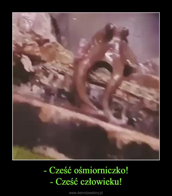 - Cześć ośmiorniczko!- Cześć człowieku! –