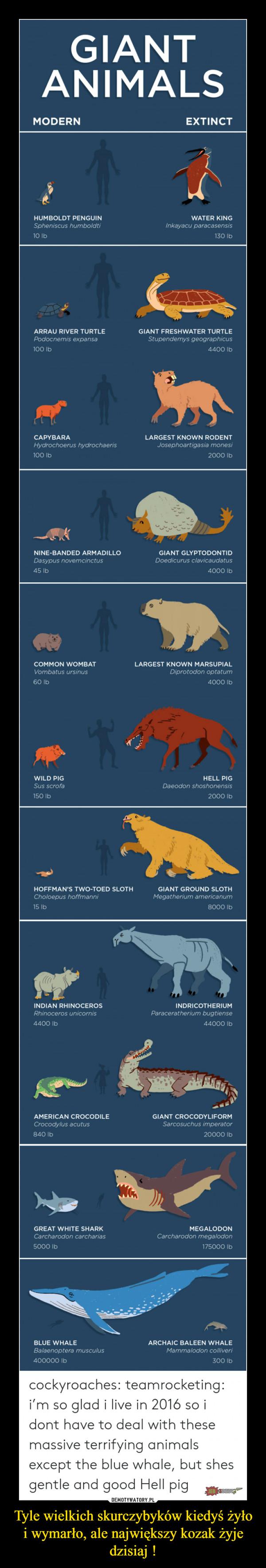 Tyle wielkich skurczybyków kiedyś żyło i wymarło, ale największy kozak żyje dzisiaj ! –