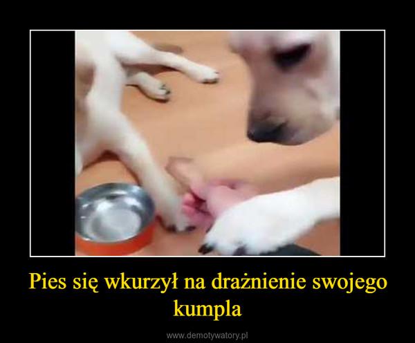 Pies się wkurzył na drażnienie swojego kumpla –