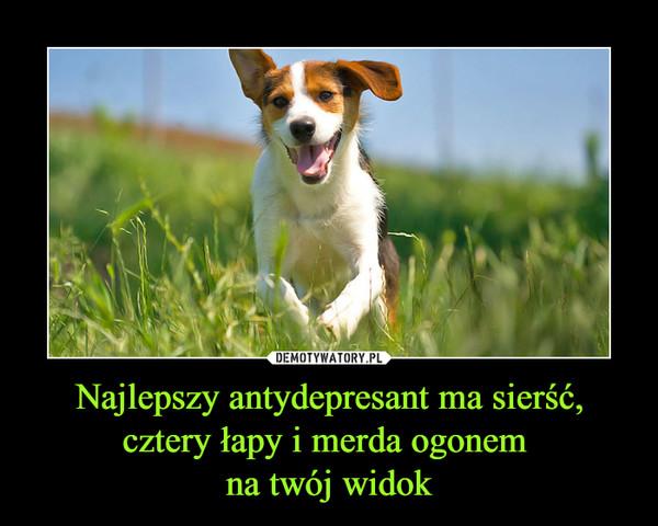 Najlepszy antydepresant ma sierść, cztery łapy i merda ogonem na twój widok –