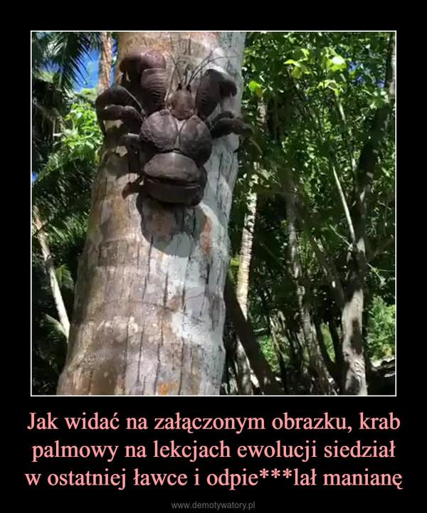 Jak widać na załączonym obrazku, krab palmowy na lekcjach ewolucji siedziałw ostatniej ławce i odpie***lał manianę –