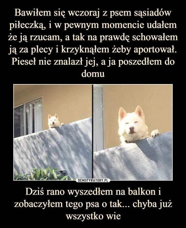 Dziś rano wyszedłem na balkon i zobaczyłem tego psa o tak... chyba już wszystko wie –