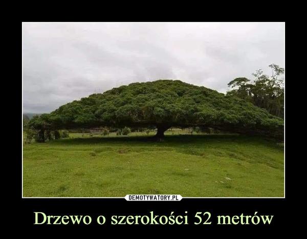 Drzewo o szerokości 52 metrów –