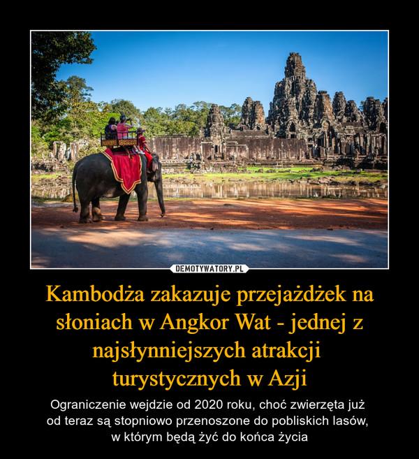Kambodża zakazuje przejażdżek na słoniach w Angkor Wat - jednej z najsłynniejszych atrakcji turystycznych w Azji – Ograniczenie wejdzie od 2020 roku, choć zwierzęta już od teraz są stopniowo przenoszone do pobliskich lasów, w którym będą żyć do końca życia