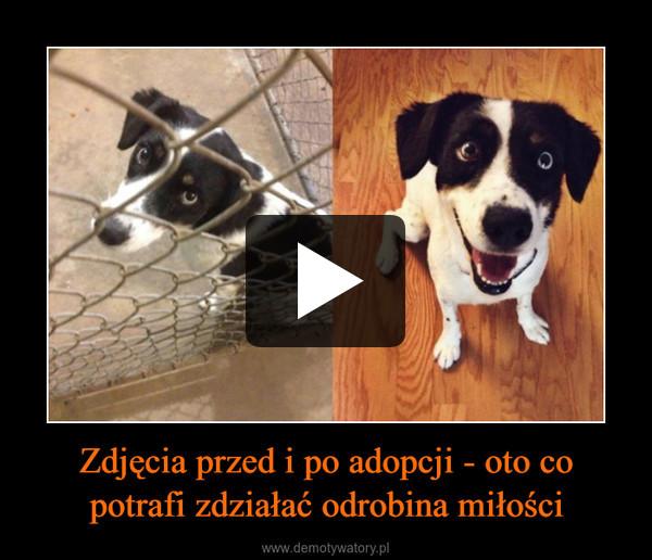 Zdjęcia przed i po adopcji - oto co potrafi zdziałać odrobina miłości –