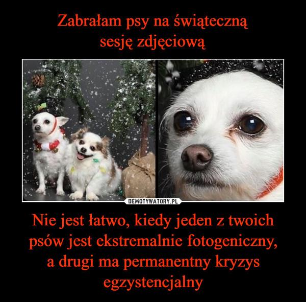 Nie jest łatwo, kiedy jeden z twoich psów jest ekstremalnie fotogeniczny,a drugi ma permanentny kryzys egzystencjalny –