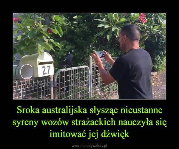 Sroka australijska słysząc nieustanne syreny wozów strażackich nauczyła się imitować jej dźwięk –