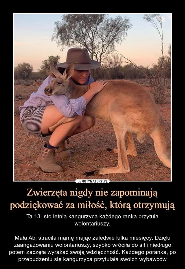 Zwierzęta nigdy nie zapominają podziękować za miłość, którą otrzymują – Ta 13- sto letnia kangurzyca każdego ranka przytula wolontariuszy.Mała Abi straciła mamę mając zaledwie kilka miesięcy. Dzięki zaangażowaniu wolontariuszy, szybko wróciła do sił i niedługo potem zaczęła wyrażać swoją wdzięczność. Każdego poranka, po przebudzeniu się kangurzyca przytulała swoich wybawców