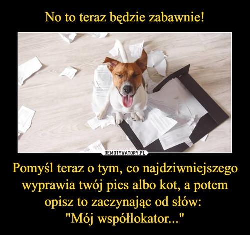 """No to teraz będzie zabawnie! Pomyśl teraz o tym, co najdziwniejszego wyprawia twój pies albo kot, a potem opisz to zaczynając od słów:  """"Mój współlokator..."""""""