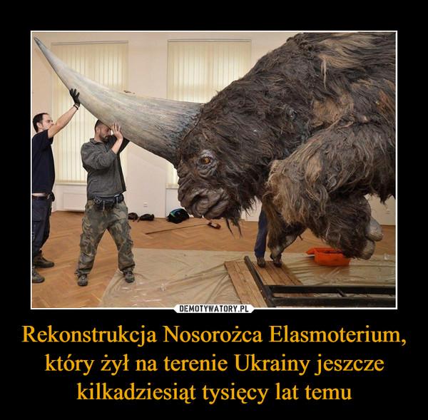 Rekonstrukcja Nosorożca Elasmoterium, który żył na terenie Ukrainy jeszcze kilkadziesiąt tysięcy lat temu –