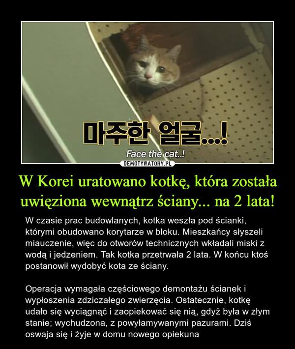 W Korei uratowano kotkę, która została uwięziona wewnątrz ściany... na 2 lata! – W czasie prac budowlanych, kotka weszła pod ścianki, którymi obudowano korytarze w bloku. Mieszkańcy słyszeli miauczenie, więc do otworów technicznych wkładali miski z wodą i jedzeniem. Tak kotka przetrwała 2 lata. W końcu ktoś postanowił wydobyć kota ze ściany. Operacja wymagała częściowego demontażu ścianek i wypłoszenia zdziczałego zwierzęcia. Ostatecznie, kotkę udało się wyciągnąć i zaopiekować się nią, gdyż była w złym stanie; wychudzona, z powyłamywanymi pazurami. Dziś oswaja się i żyje w domu nowego opiekuna